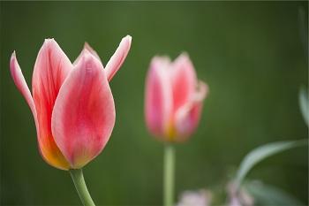 Gefahren im Frühling vermeiden Bild oben