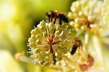 Gefahren im Frühling vermeiden Ratgeber Bild mittig-oben