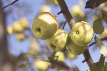 Früchte des Frühlings Anleitung Bild unten